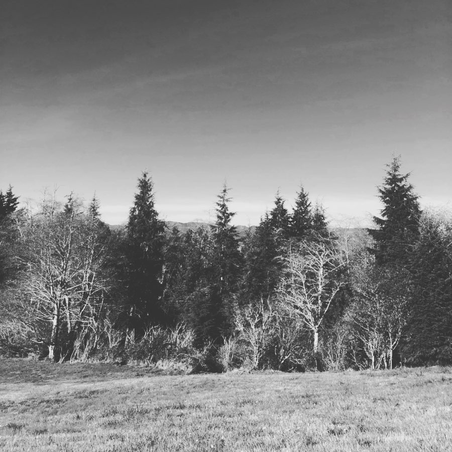 An image of the view from hillside beneath the Astoria Column in NW Oregon