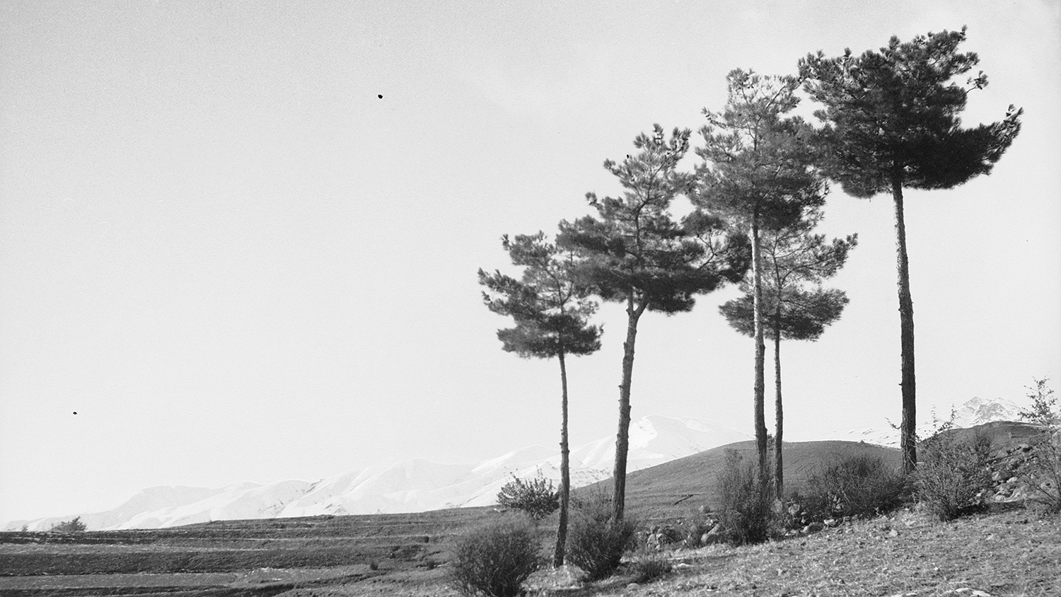 Trees in foreground, snow-covered hills in background