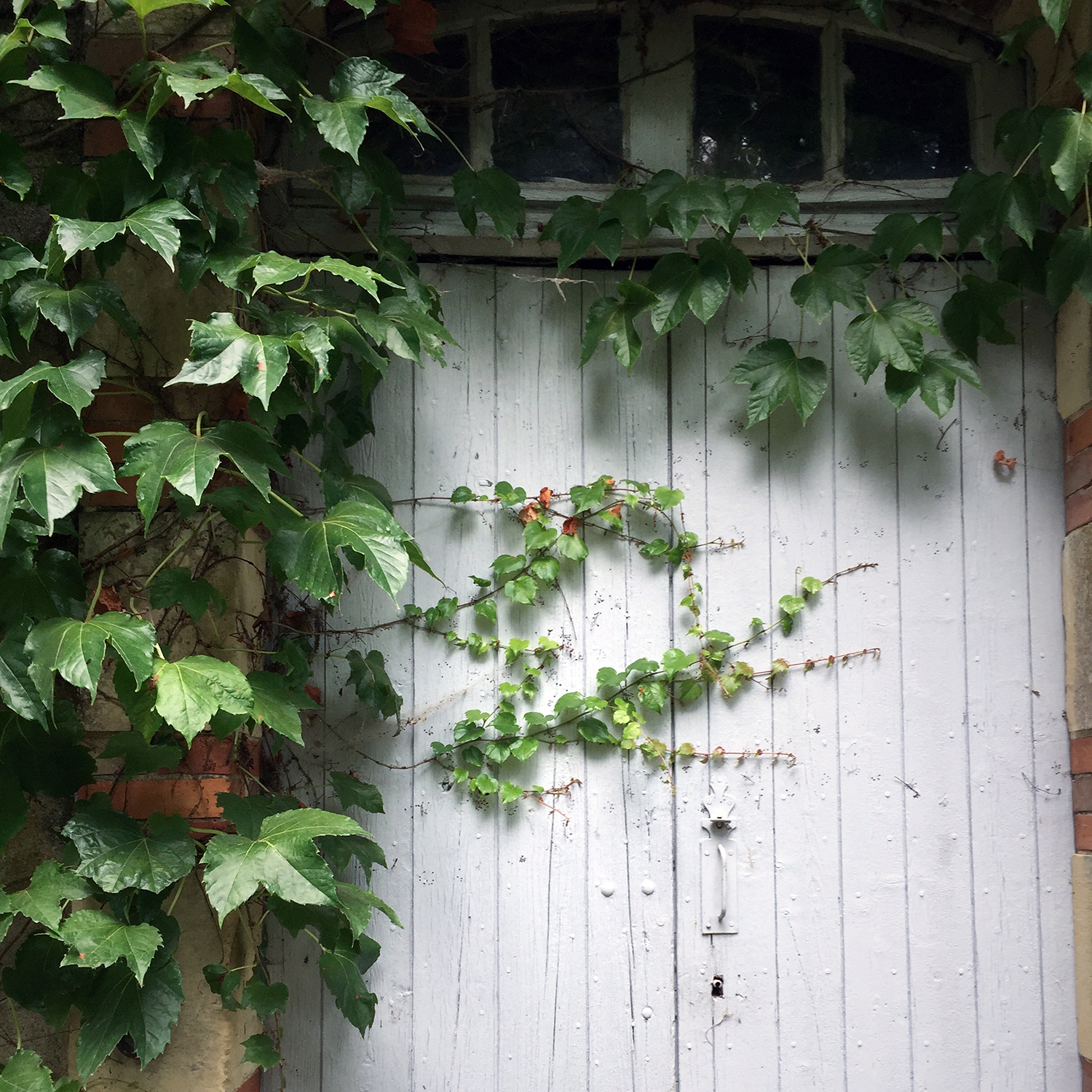A doorway half-hidden by ivy.