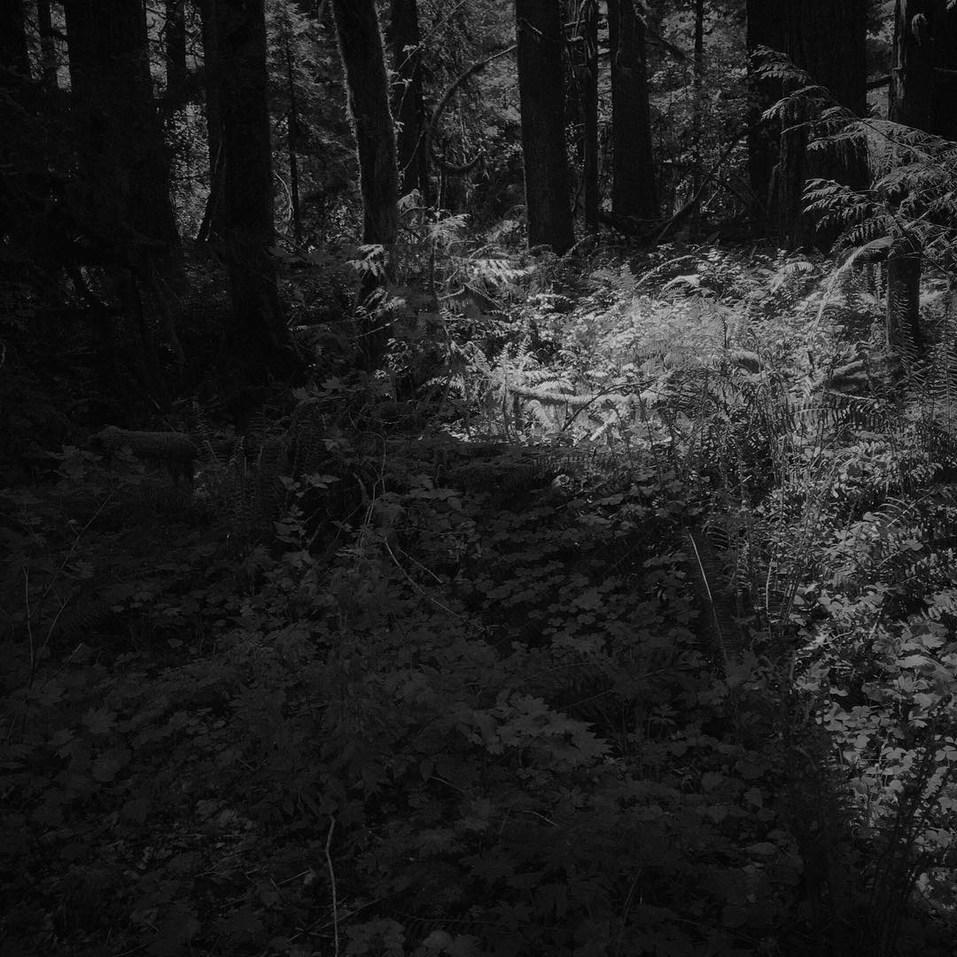 a rather underexposed image for a forest on a sunny day in spring