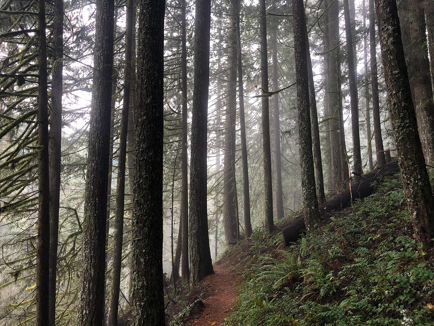 A view along the Hunchback mountain trail, featuring some trees, a trail, some mist, and the suggestion of a distant view.