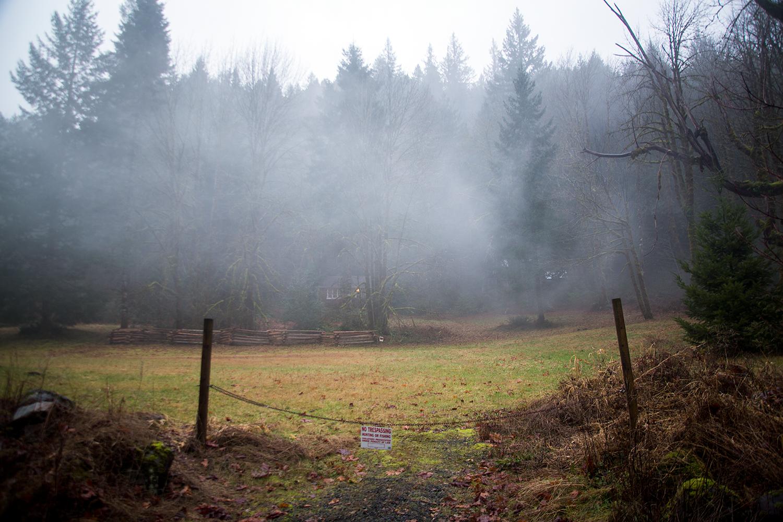 A mist, a meadow, winter