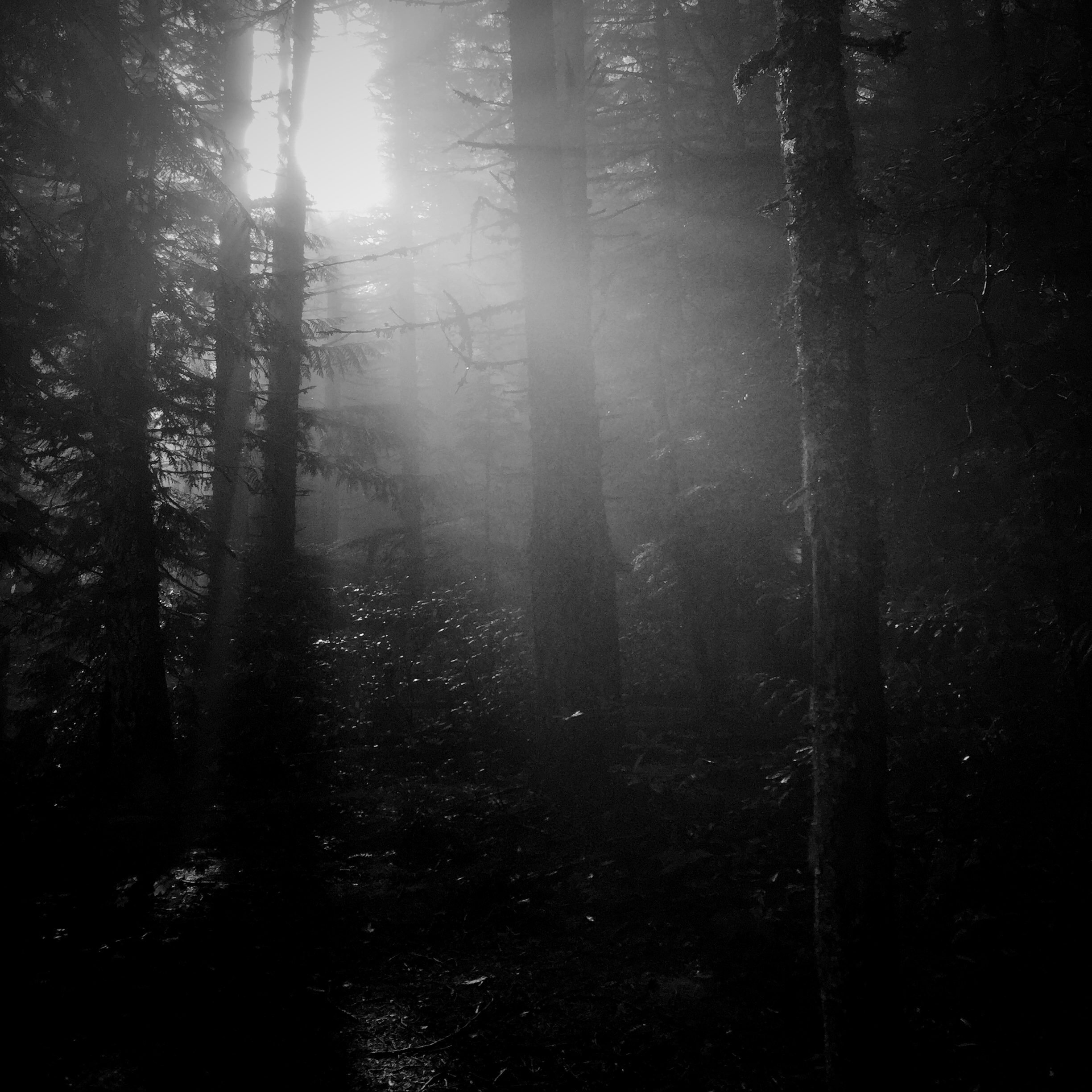 a picture of sunlight shining through some rather dark trees up at the mountain near a lake