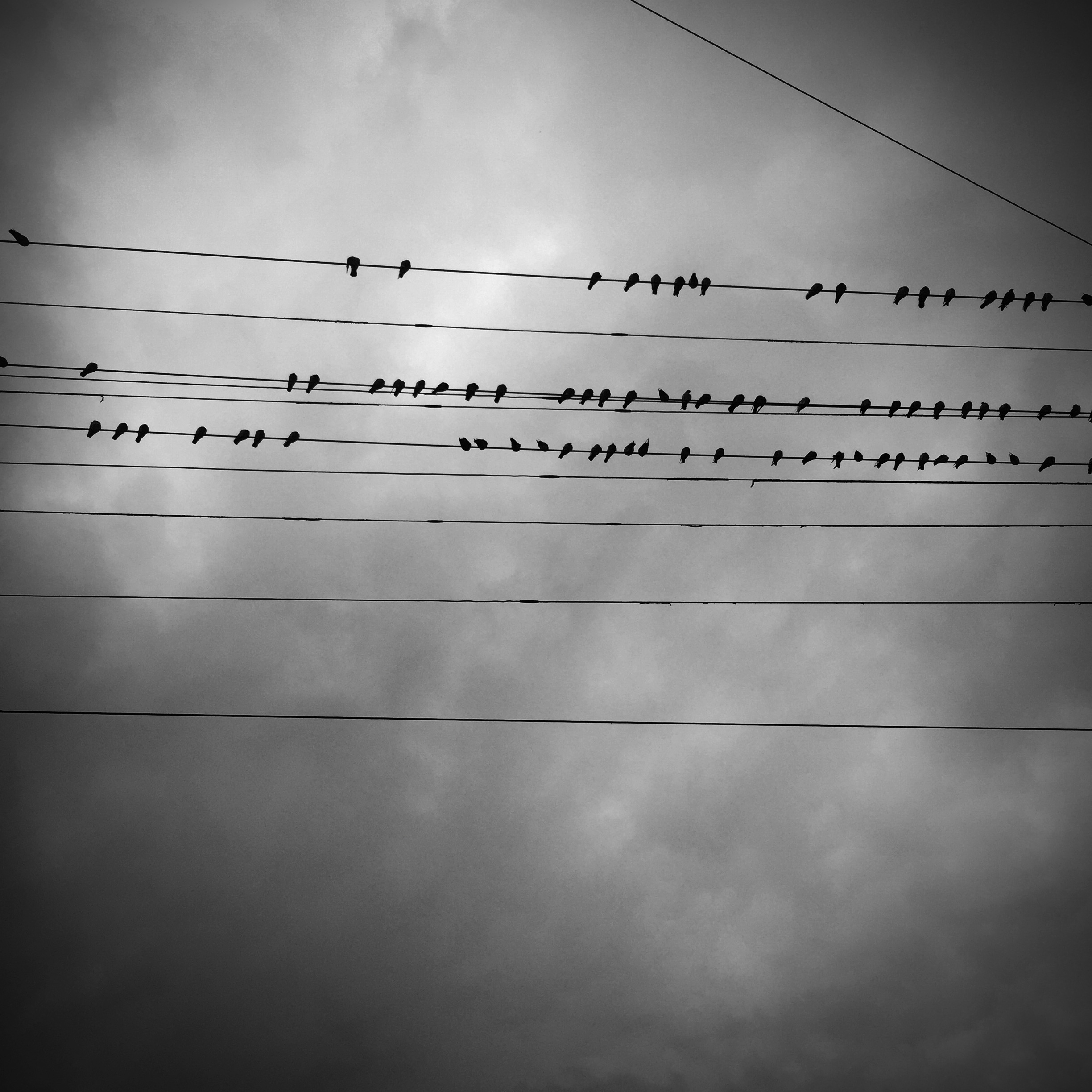 A photograph of some birds on a wire against a dramatic cloudy sky