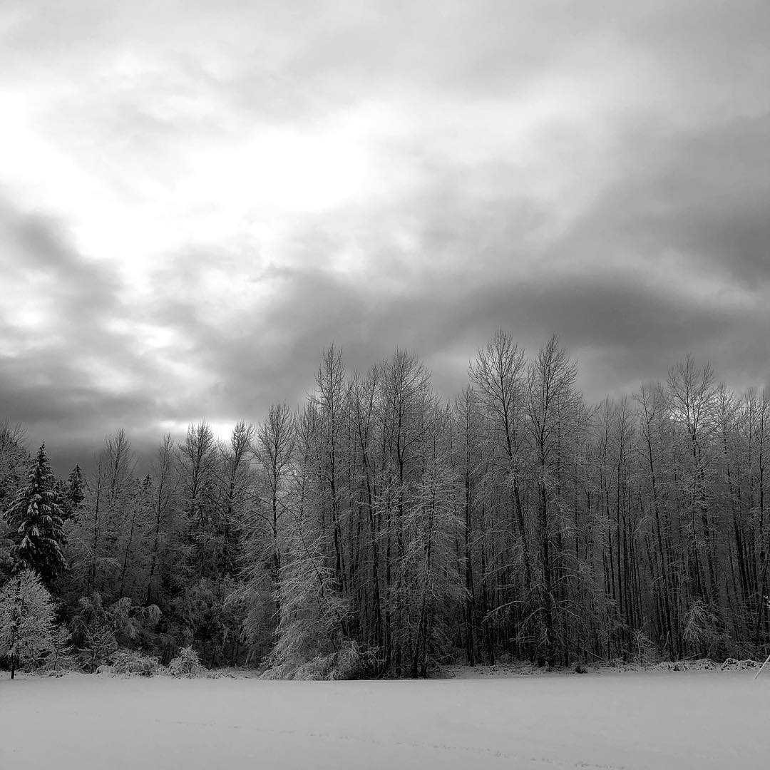 image of the empty school playing field at Welches Middle School on a winter morning, soft ambient light and graceful lines of trees