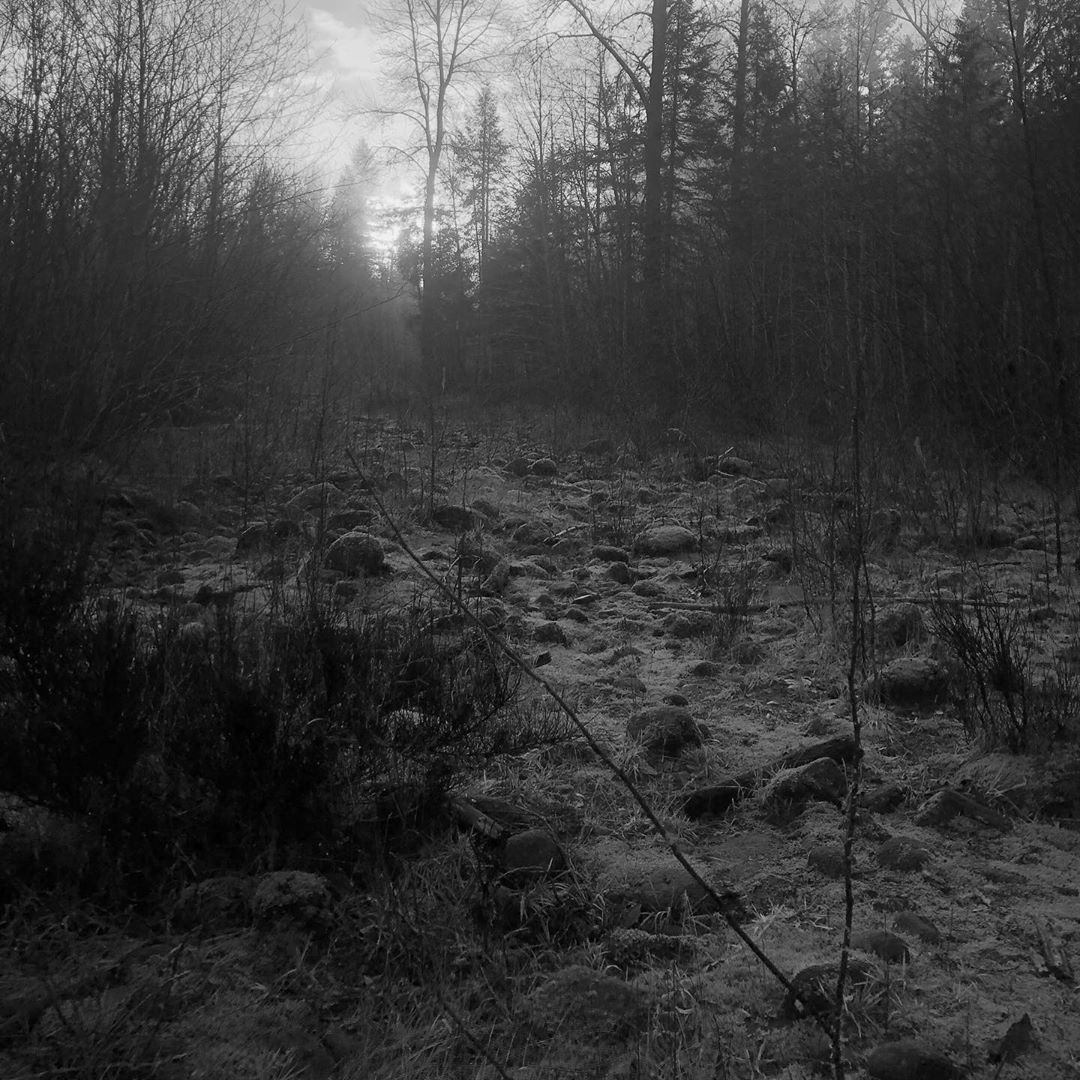 a very dark and dreary picture of some rocks and moss and dry riverbed