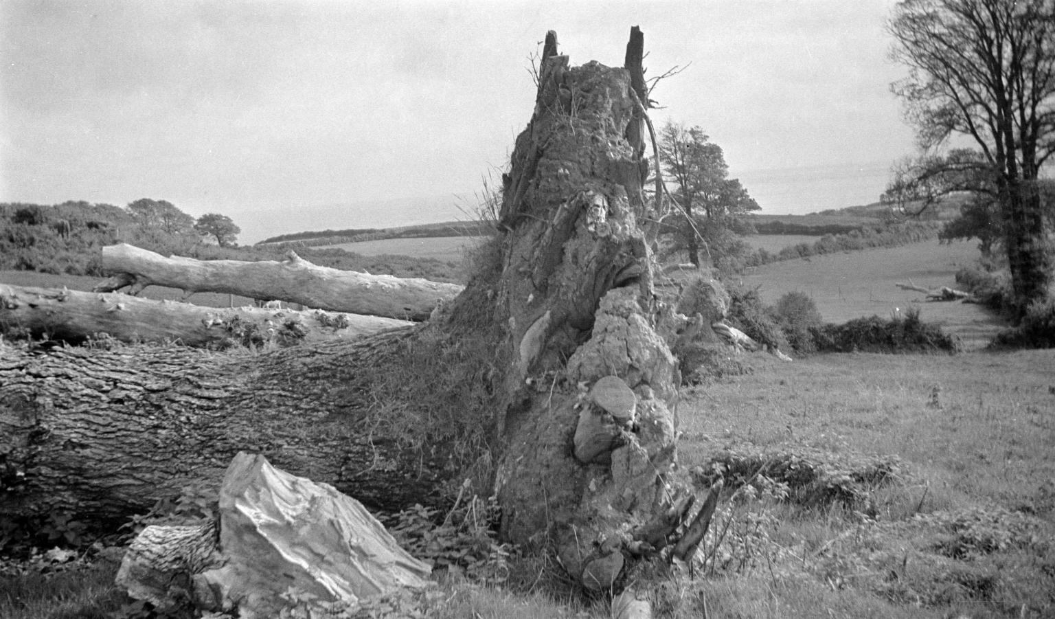Paul Nash, Stalking Horse, 1941