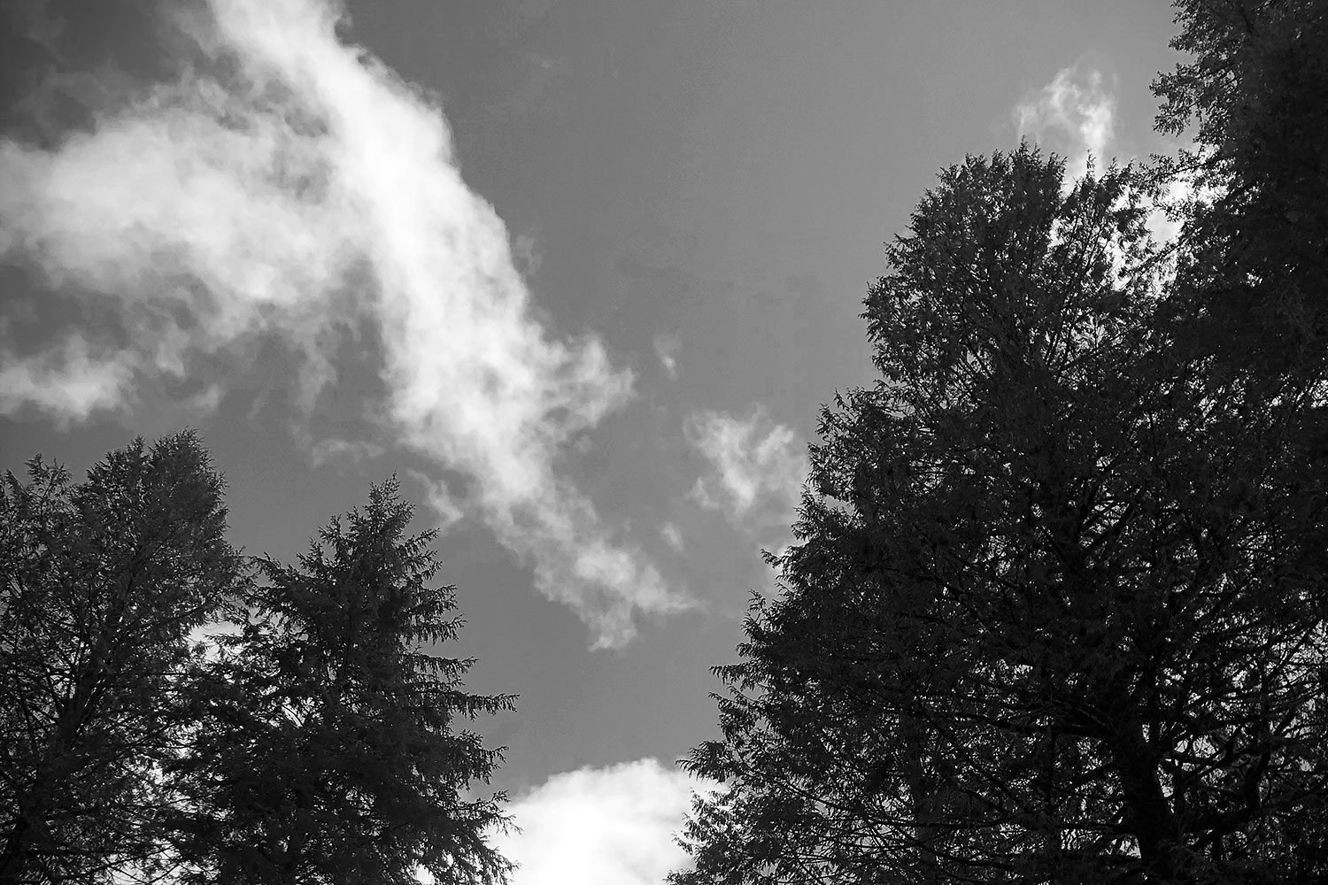 clouds, trees, sky