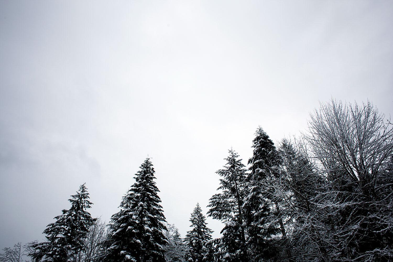 Snow, trees, sky.